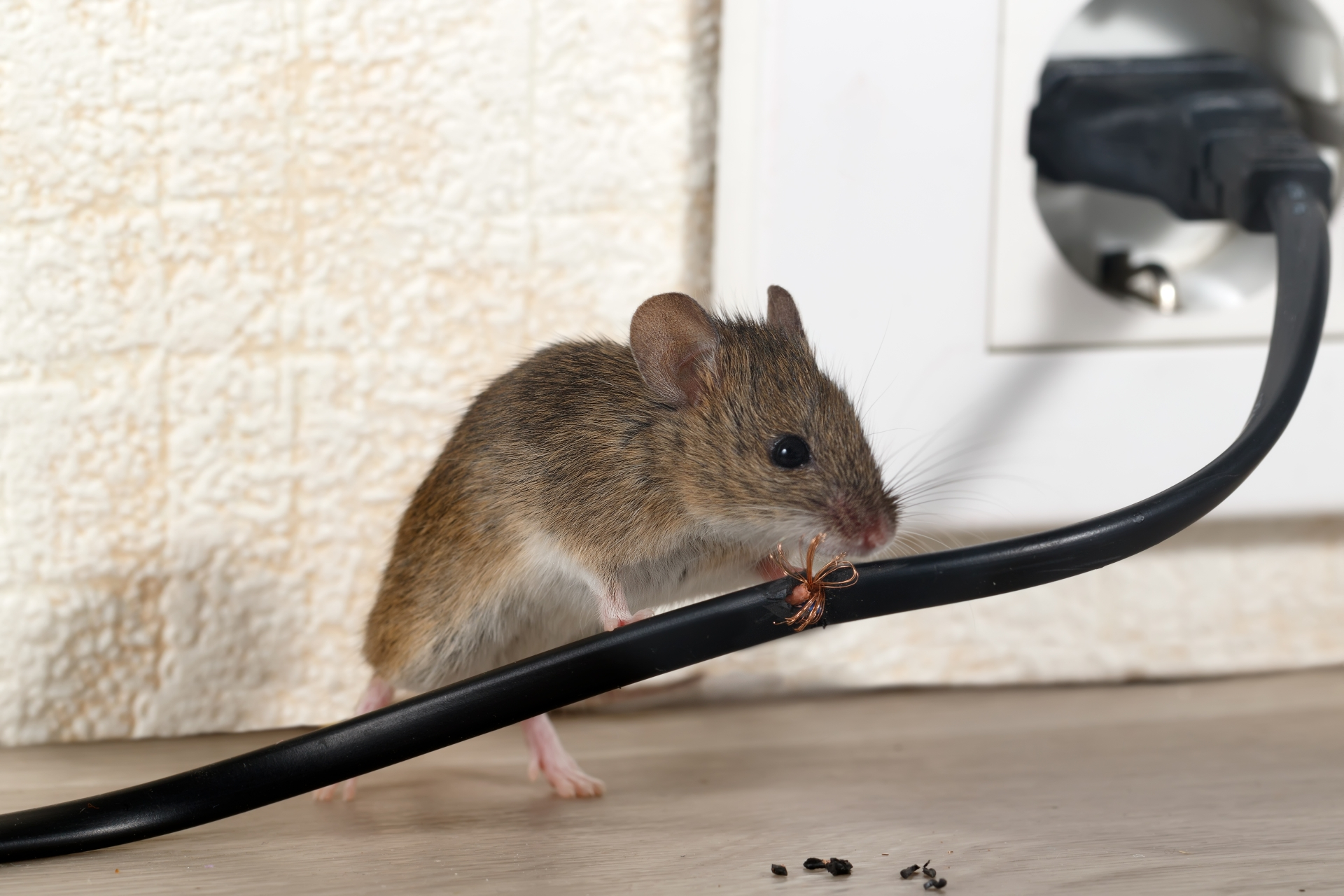 Mice Infestation, Pest Control in Southgate, N14. Call Now 020 8166 9746